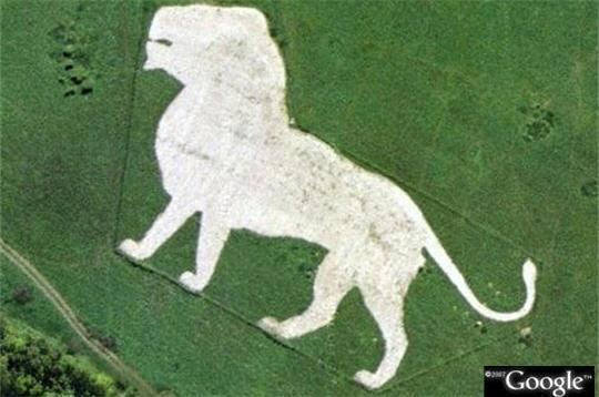 lion_anglais