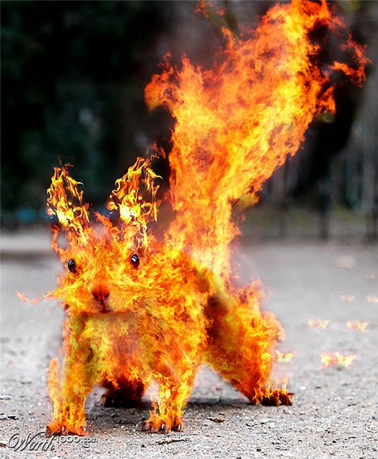 Top 40 des photomontages de FEU 18