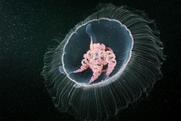 Les incroyables monstres des profondeurs 24