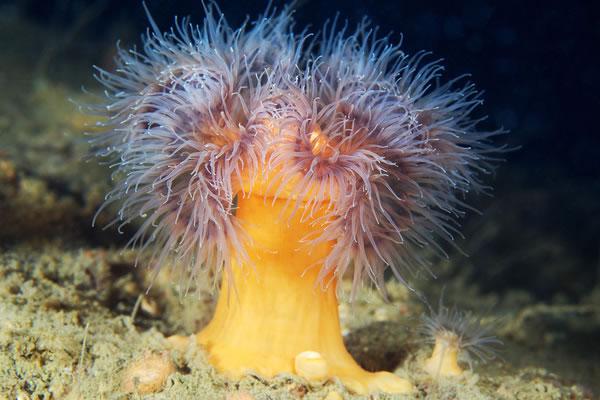 Les incroyables monstres des profondeurs 15