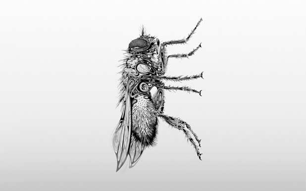 Le superbe illustrations d'animaux de Si Scott 22