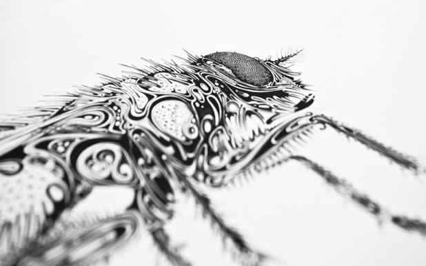 Le superbe illustrations d'animaux de Si Scott 23