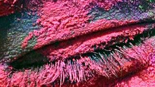 Holi - Le festival des couleurs 1