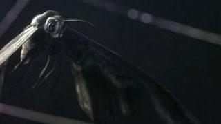Loom - modélisation 3D d'une araignée et d'une bataille - WOW 1