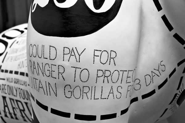 un Gorille typographique pour le 175ème anniversaire du Zoo de Bristol 13