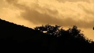 Le rhinocéros volant - WWF