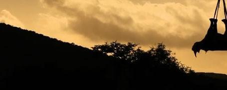 Le rhinocéros volant - WWF 4