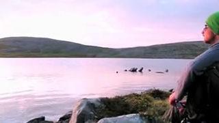 Seconds Of Beauty - 60 courts métrages d'une seconde