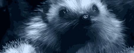 VOLKSWAGEN Hedgehog 7