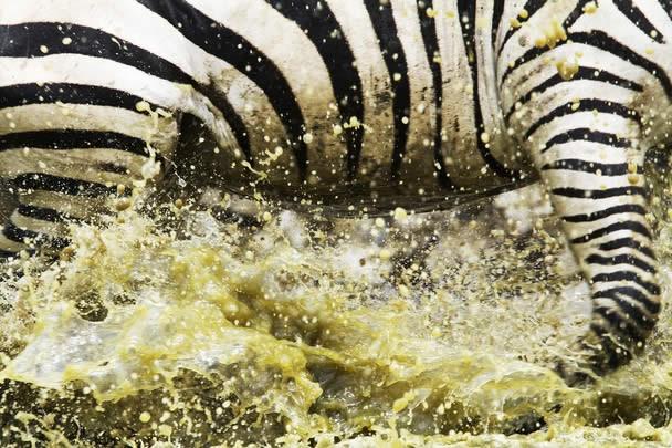 Les gagnants du National Geographic Photo Contest 2011 13