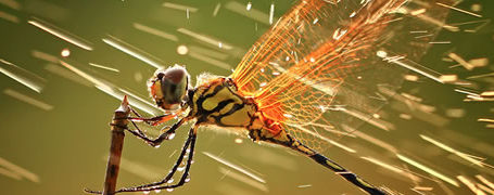 Les gagnants du National Geographic Photo Contest 2011 2
