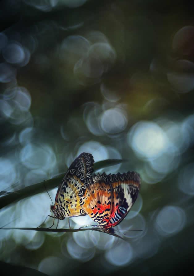Les incroyables Photos Macros de Lee Peiling 23