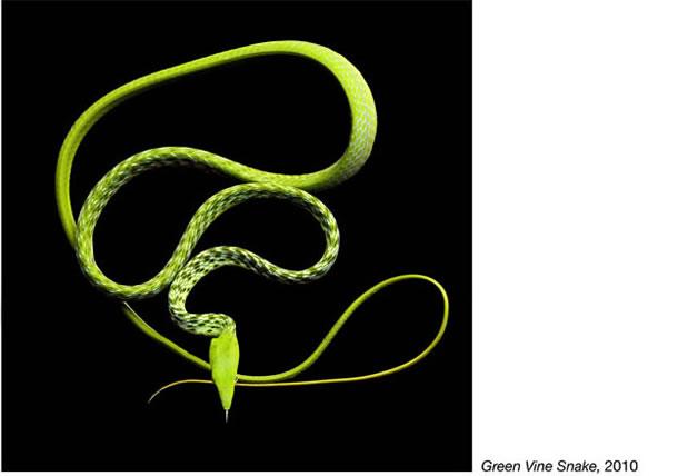 Serpentine - Photos de serpents colorés 16