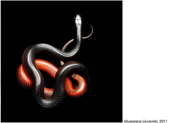 Serpentine - Photos de serpents colorés 25