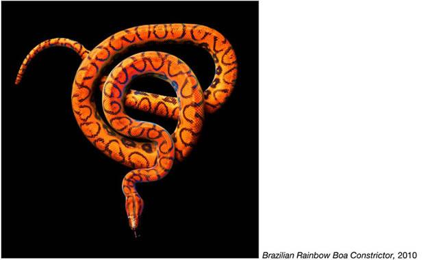 Serpentine - Photos de serpents colorés 9
