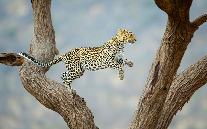 50 superbes photos du concours photos 2012 du National Geographic 21