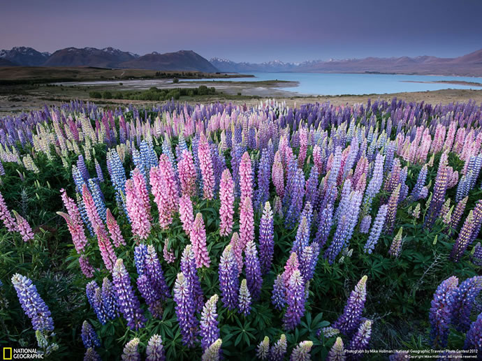 50 superbes photos du concours photos 2012 du National Geographic 45