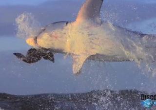 Attaques de requin en SlowMotion 1