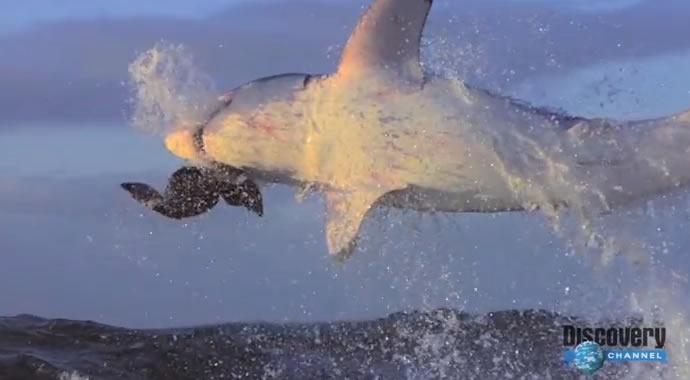 Attaques de requin en SlowMotion 2