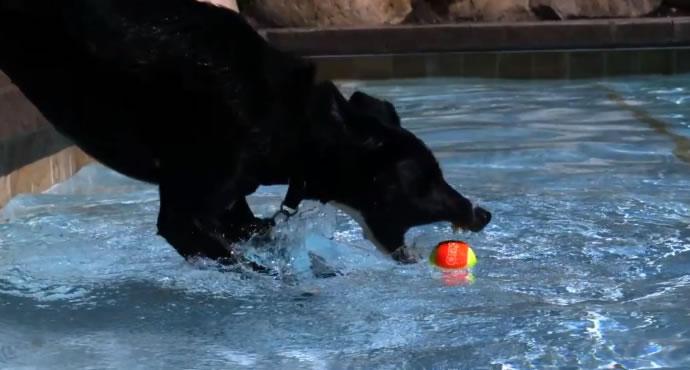 Des chiens dans une piscine en Slow motion 2