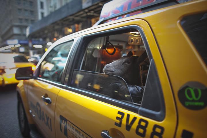 Les 95 meilleures photos de 2012 par Reuters 70