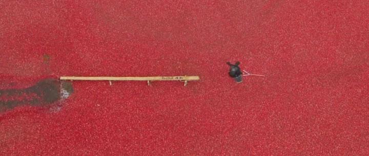 wakeboard cerises redbull
