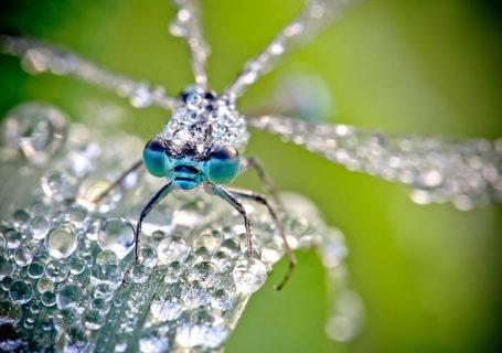"""Photos : Les macros """"gouttes d'eau"""" d'animaux de David Chambon 1"""