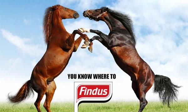 détournement parodie findus cheval (19)