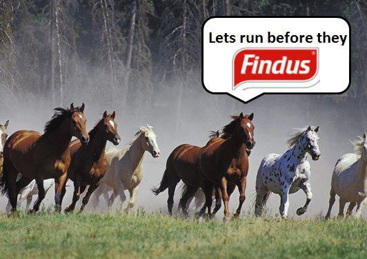 détournement parodie findus cheval (7)