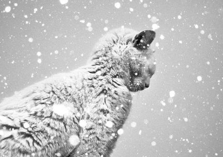 Superbes photographies Noir & Blanc de Benoit Courti 4