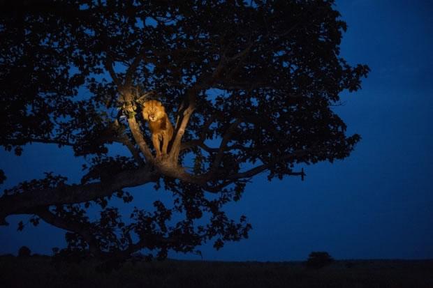 25 Dans le parc national Queen Elizabeth (Ouganda, 2010)