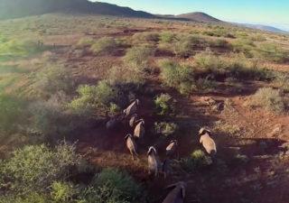 Nature : Vue aérienne en drone au Serengeti 1