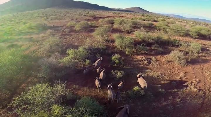drone serengeti