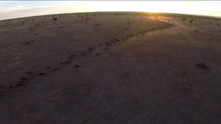 drone video serengeti