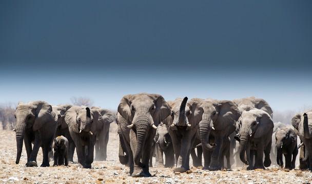 Etosha, Namibia by Cris Schmid