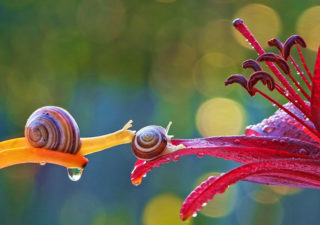 Photographies : Les superbes macros d'escargots de Yacheslav Mishchenko