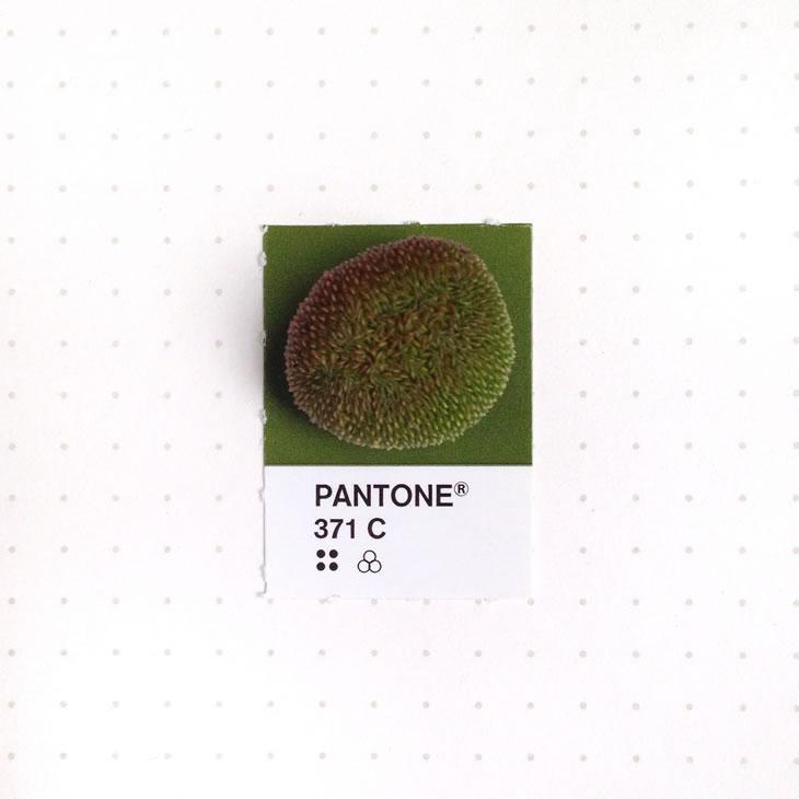 objets-couleur-pantone-20