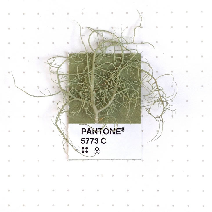 objets-couleur-pantone-24