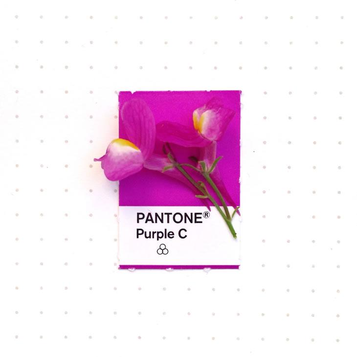objets-couleur-pantone-27