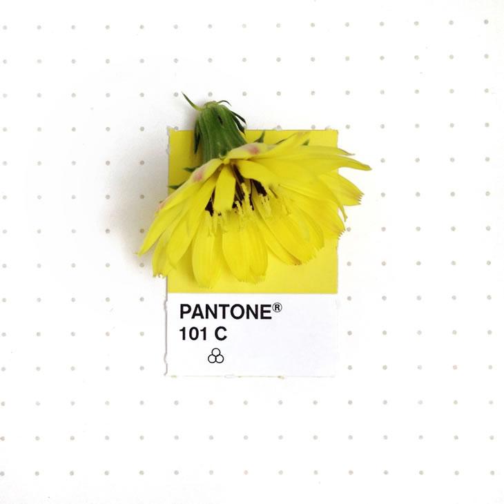 objets-couleur-pantone-29
