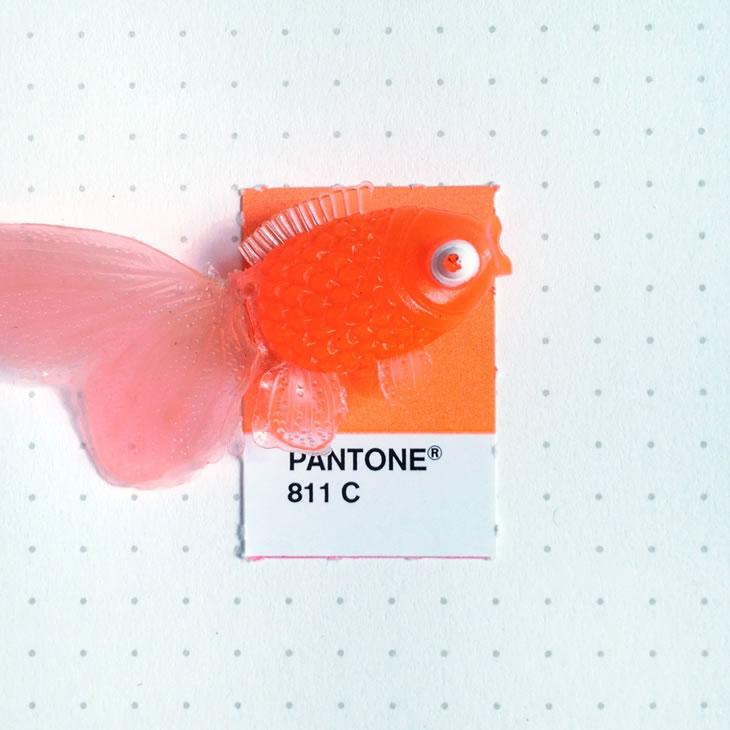 objets-couleur-pantone-3
