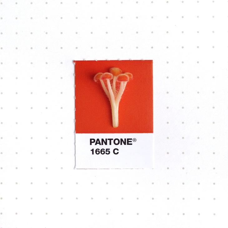 objets-couleur-pantone-32