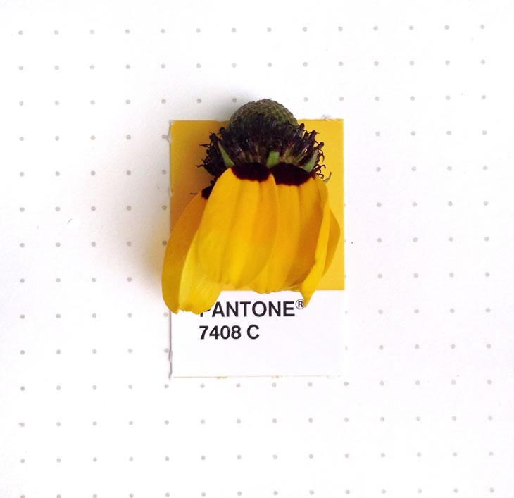 objets-couleur-pantone-40