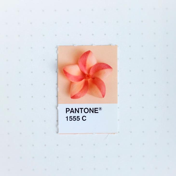 objets-couleur-pantone-46