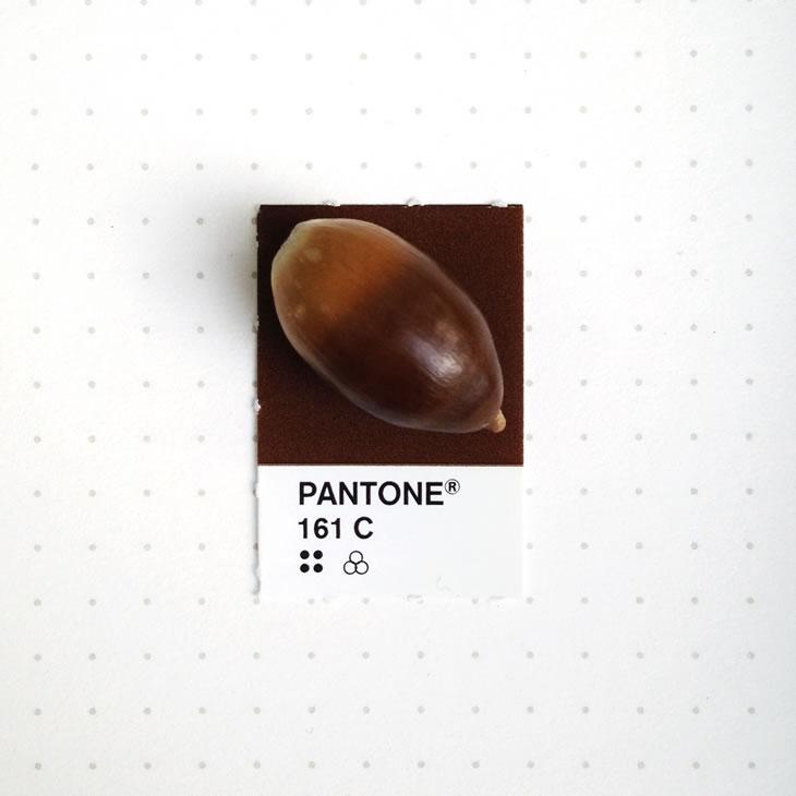 objets-couleur-pantone-49