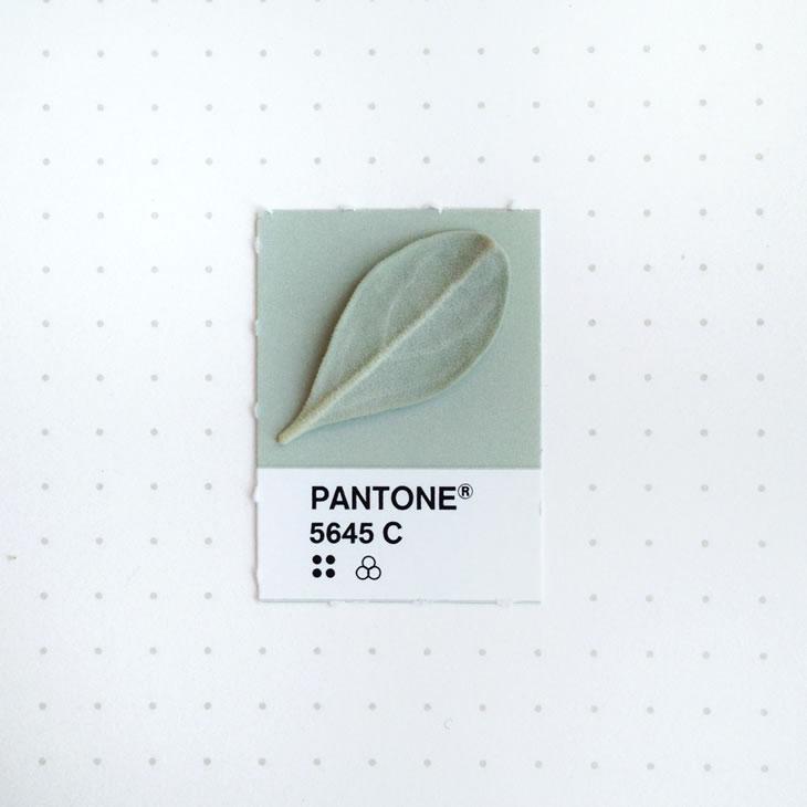 objets-couleur-pantone-5