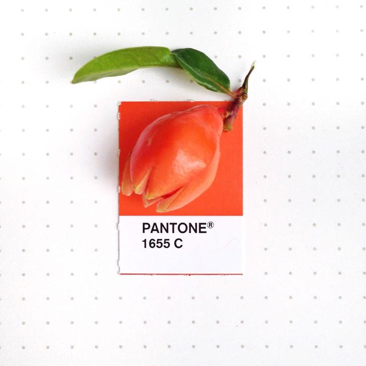 objets-couleur-pantone-6