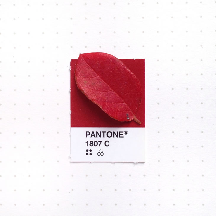 objets-couleur-pantone-7
