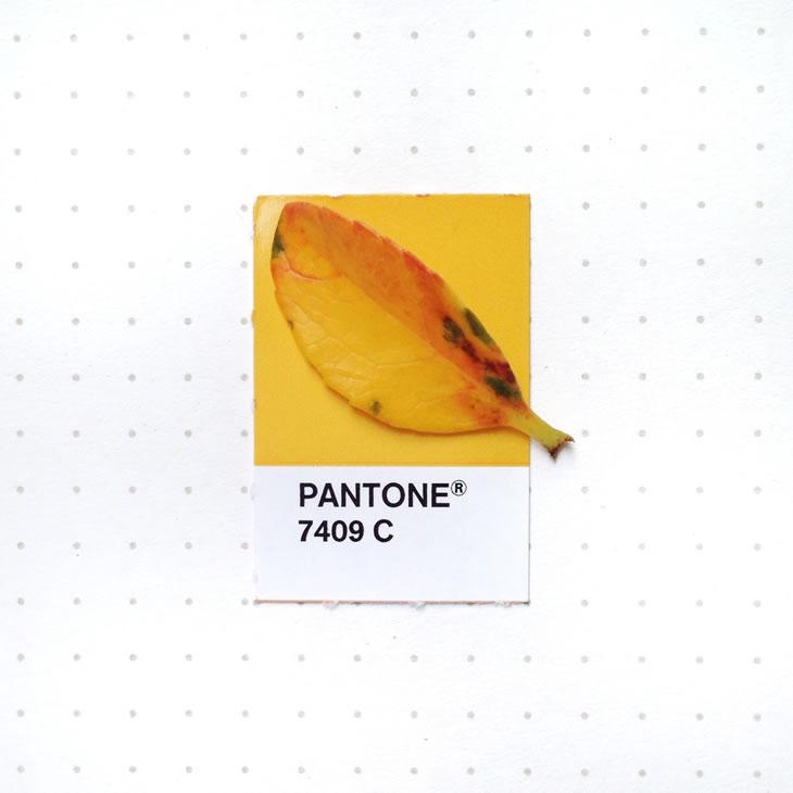 objets-couleur-pantone-8