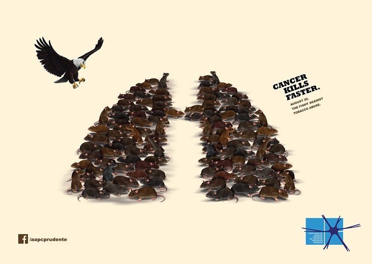 graphic-ads-olybop-aout14-11